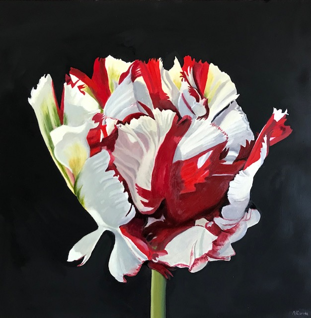 Tulipa Estella Rijnveld