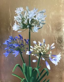 Agapanthus on Gold