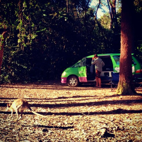 A wallaby stopping by our van at Ferns Hideaway, Byfield, Australia