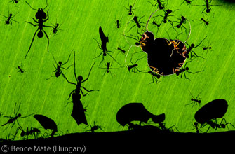 A marvel of ants