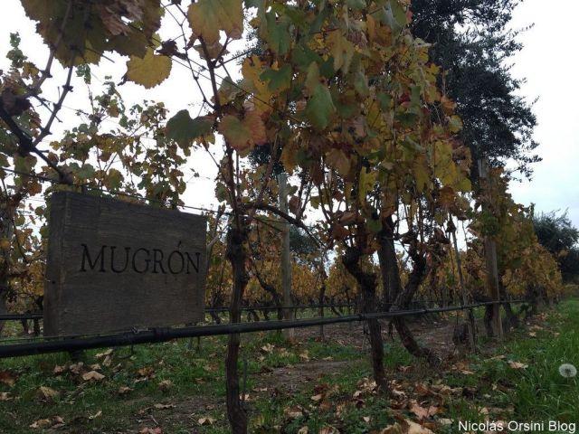 Viñedo de Mendel Wines