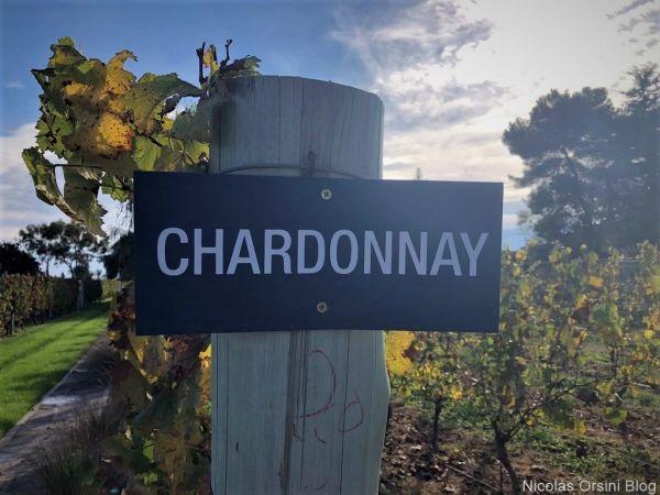 Chardonnay en Argentina