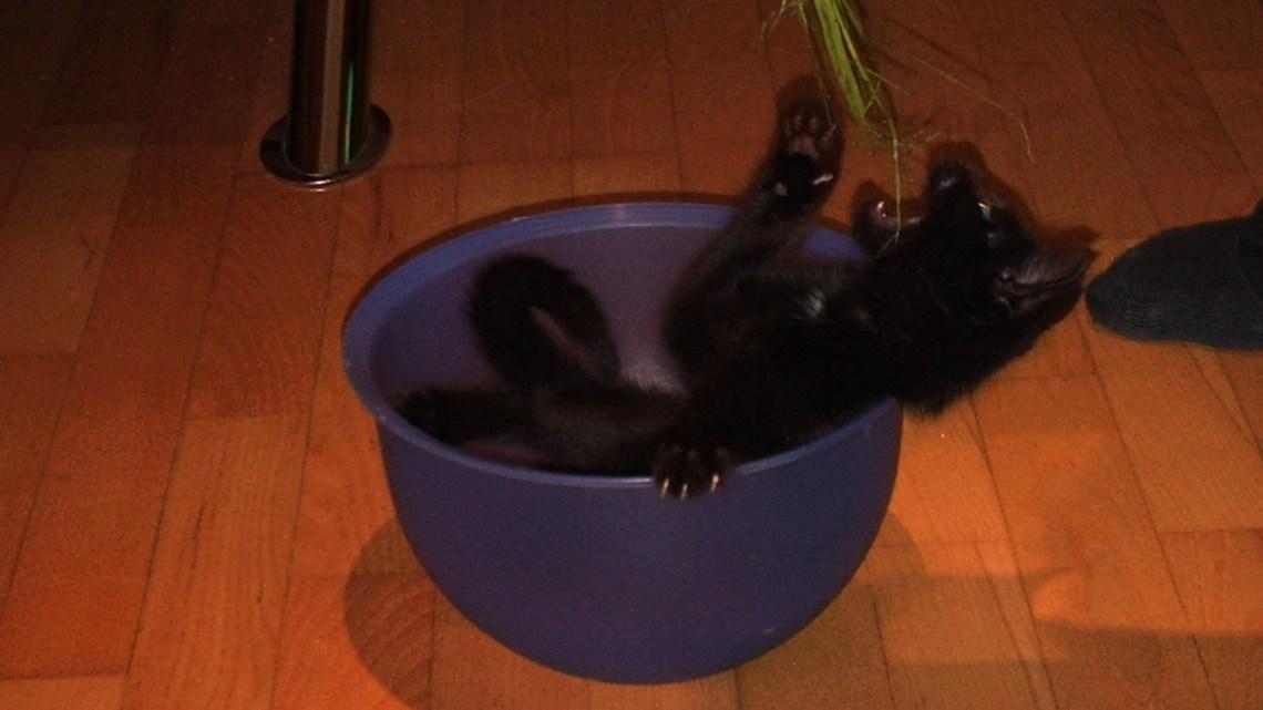 Warum hat eine Katze Rückgrat?