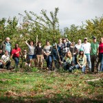Orchard harvest and mulch team