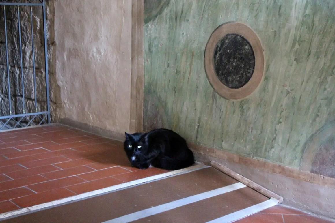 "Subiaco-travel-tips-lazio-italy-monastero-di-san-benedetto-cat ""width ="" 1200 ""height ="" 800 ""data-wp-pid ="" 9978 ""srcset ="" https: //www.nicolos- reiseblog.de/wp-content/uploads/2019/02/Subiaco-reisetipps-latium-reisetipps-italien-Monastero-di-San-Benedetto-katze.jpg 1200w, https://www.nicolos-reiseblog.de/wp -content / uploads / 2019/02 / Subiaco-travel-tips-latium-routes-italië-monastero-di-san-benedetto-cat-300x200.jpg 300w, https://www.nicolos-reiseblog.de/wp-content/ uploads / 2019/02 / Subiaco-travel-tips-latium-italy-monastero-di-san-benedetto-cat-1024x683.jpg 1024w, https://www.nicolos-reiseblog.de/wp-content/uploads/2019 /02/Subiaco-travel-tip-latium-travel-tip-italy-monastero-di-ed-benedetto-cat-800x533.jpg 800w, https://www.nicolos-reiseblog.de/wp-content/uploads/2019/02/ Subiaco triplettip latium triplet-italy-monastero-di-sender-bedo-catze -300x200@2x.jpg 600w ""sizes ="" (max-width: 1200px) 100vw, 1200px ""/><img alt="