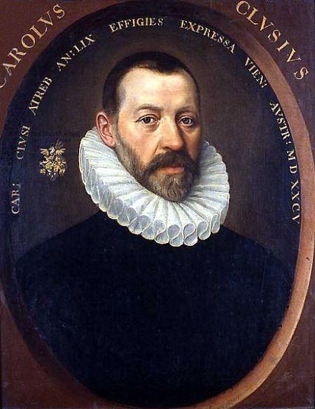 Carolus Clusius brought the tulip to Holland