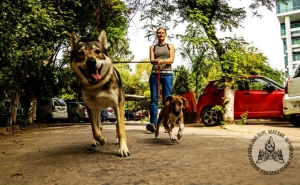 W Indiach, fot. Przemek Bucharowski, źródło: www.3wilki.pl.