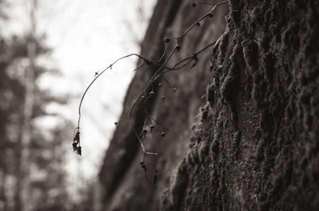 Sienų augmenija