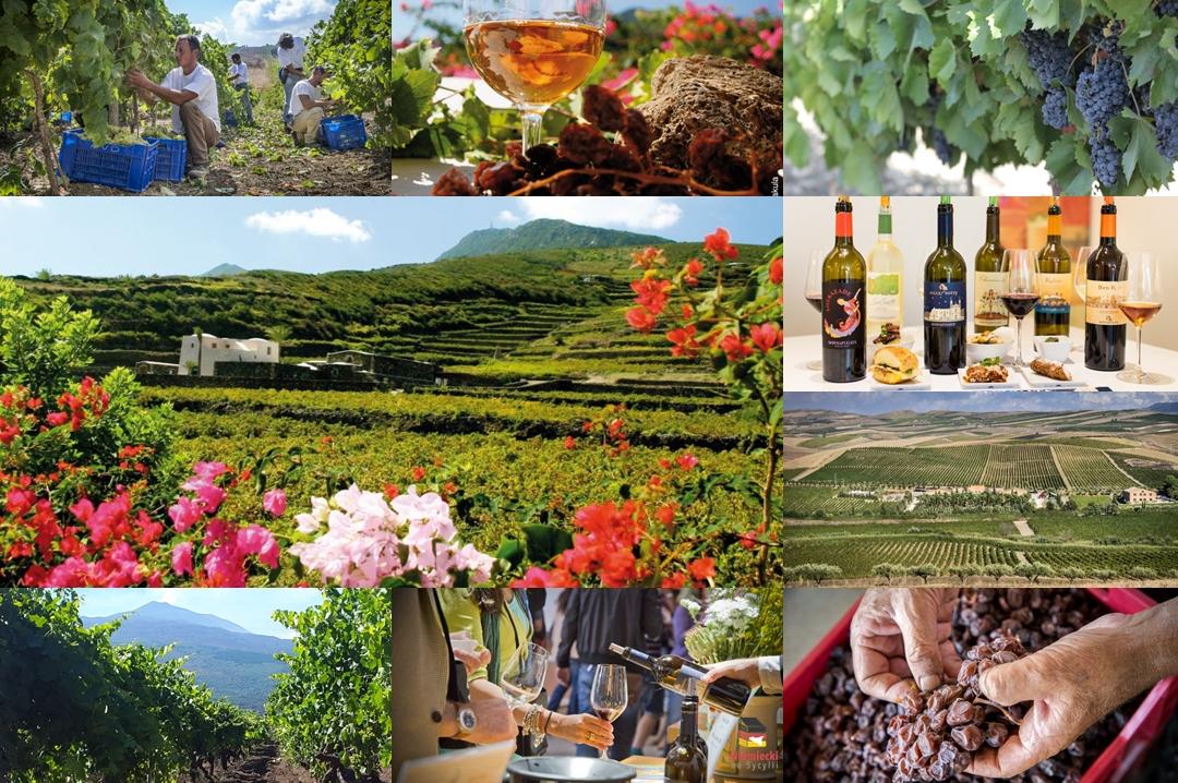 Donnafugata, Marsala, Donnafugata, rodzina Rallo, Rallo, Contessa Entellina, Panele słoneczne, ochrona środowiska, Marsala, Sycylia, Wino, Wino Sycylia, Wino Marsala, Trapani, wina sycylijskie, sycylijskie wina, wina z Sycylii, Khamma, Pantelleria, metoda alberello, zibibbo, passito di pantelleria, moscato di pantelleria, zibibbo, Nero-d'Avola, Vittoria, Etna, bell'assai, wizyta w Donnafugata, degustacja wina w Marsali, degustacja wina Marsala, piwnica winna, piwnica, wino w beczkach, beczki z winem, calici di stelle