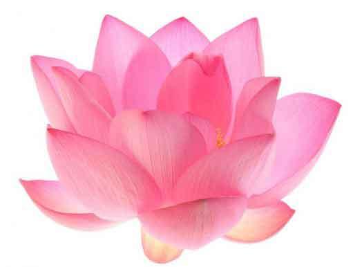 Hình đại diện Thiện căn phước đức nhân duyên