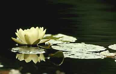 Hình ảnh Thanh Tịnh Pháp Thân Phật