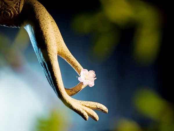 Hình đại diện 10 cách gieo trồng phước đức