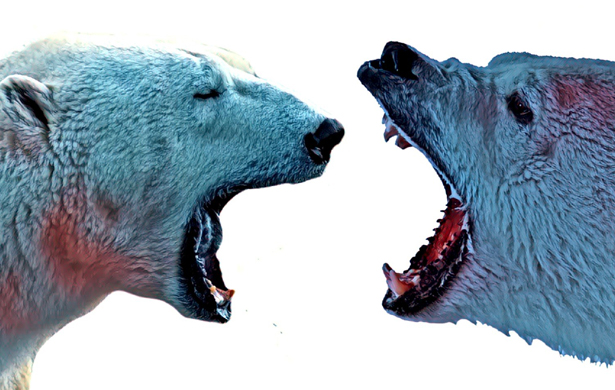 Trzecie plemię, czyli efekt białego niedźwiedzia