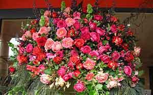 rozen om je aura zetten Oefening voor het beschermen van je aura energetische bescherming