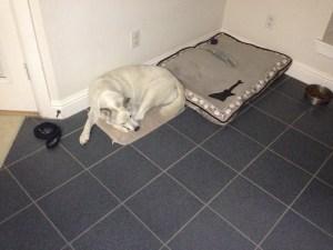 Sidnei, Siberian Husky, favorite mat