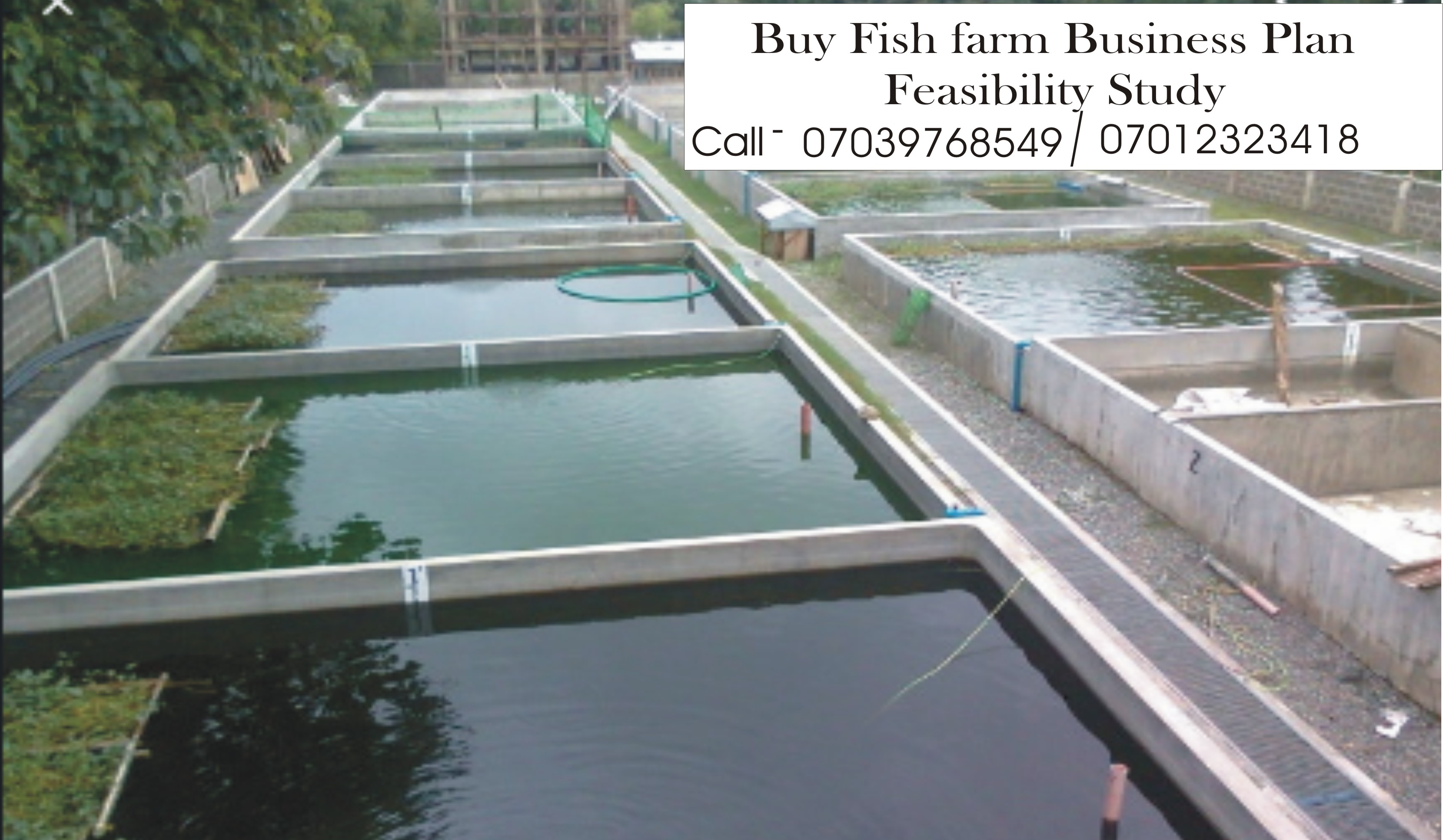 Business plan on catfish farming pictures to write a short story