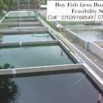 Fish Farming Business Plan In Nigeria