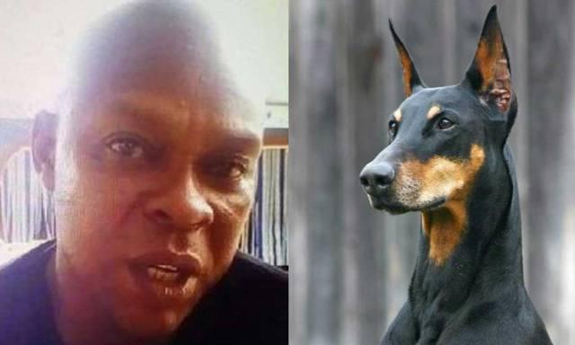 Dog 'Buhari