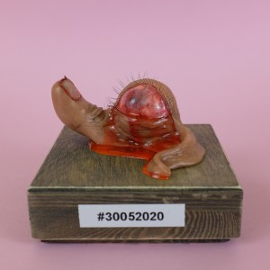 Thumbsnail Specimen #30052020 - OOAK Surreal Horror Creature Sculpture by Rachel Weaver