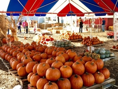 [News] Mr. Jack O'Lanterns Pumpkin Patch to Open Amidst Coronavirus Pandemic