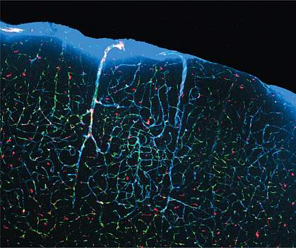 Fluid flowing through channels in the brain.