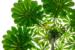 CO3~1~Novice~Emma Beatty~Howells~Canopy_Pattern~25