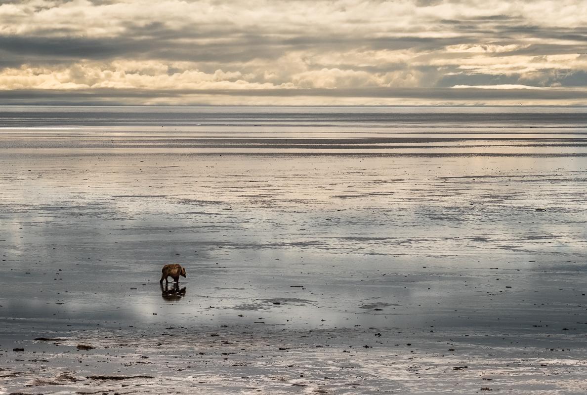 (HM) Advanced~John Norvell~Lonesome Bear