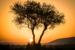 (HM)Novice~Nathanael Lee~Maasai Mara Sunset