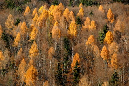 Autumn as an expression of an organic cycle that integralism sees as the highest value.