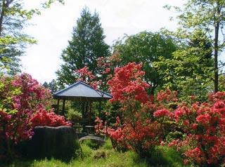 大稲場グリーンパークの写真7