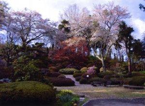 杉沢大杉の庭の写真