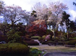 杉沢大杉の庭の写真1