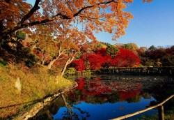 秋部門優秀賞:秋の公園