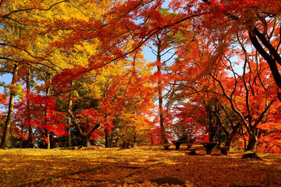 【優秀賞】秋の調べ