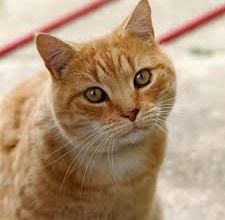 Photo of Hong Kong: Cat Tests Positive For Coronavirus