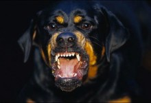 Photo of Dog arrested for biting student's manh*od in a hostel