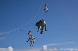 Zebra und Elefant