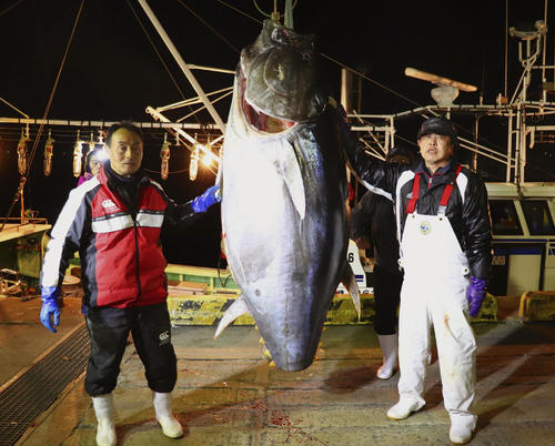 一番マグロ釣った漁師藤枝さん「実感が湧かない」
