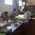 収穫した葡萄を選別する社員