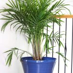 How To Properly Pot an Indoor Tree
