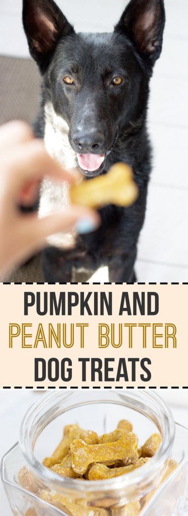 Pumpkin Peanut Butter Dog Treats - Healthy, dairy free treats to settle your puppies stomach || www.nikkisplate.com