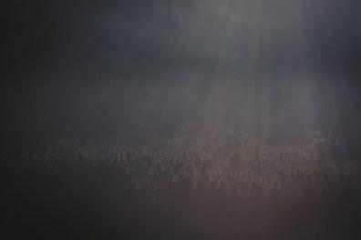 alpsee-bayern-allgaeu-landschaft-reise-fotografie