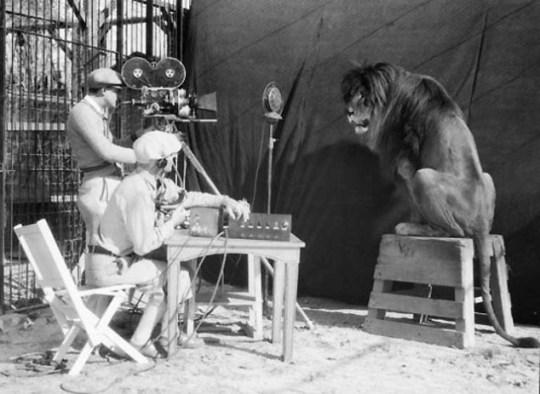 MGM, Λιοντάρι