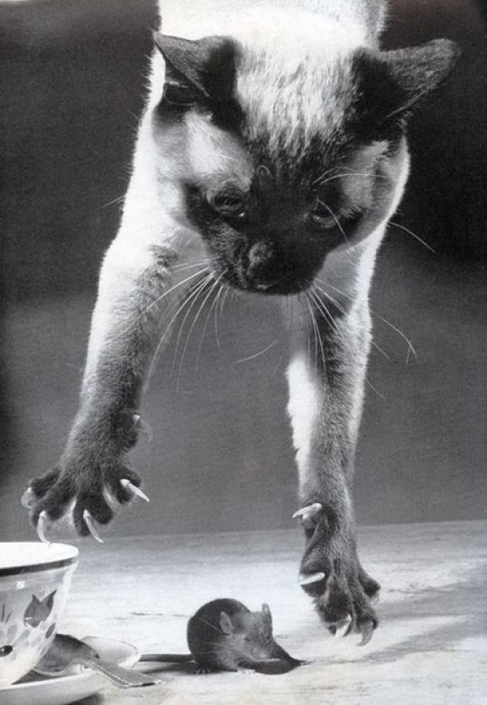 Animals, Φωτογραφίες, Ζώα, ΤΟ BLOG ΤΟΥ ΝΙΚΟΥ ΜΟΥΡΑΤΙΔΗ, nikosonline.gr, Nikos On Line