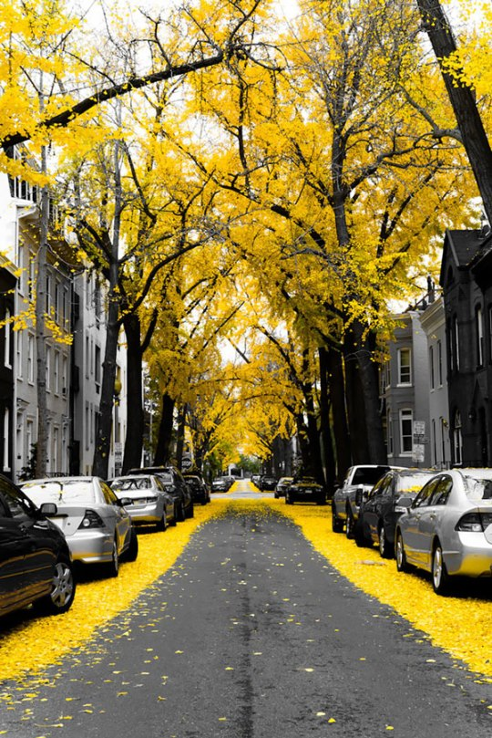 . Ουάσιγκτον, ΗΠΑ