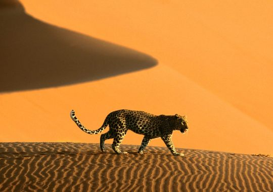 Sossusvlei_Namib_Desert_Namibia6