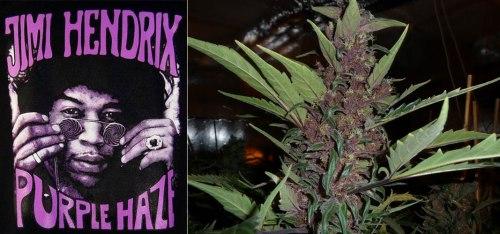 Τζίμι Χέντριξ ηχογραφεί το «Purple Haze», ΤΟ BLOG ΤΟΥ ΝΙΚΟΥ ΜΟΥΡΑΤΙΔΗ, nikosonline.gr,