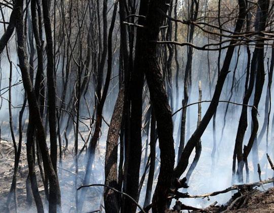 Πυρκαγιές στην Ελλάδα, Greece wildfire, ΤΟ BLOG ΤΟΥ ΝΙΚΟΥ ΜΟΥΡΑΤΙΔΗ, nikosonline.gr