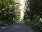 Durch romantische Waldstraßen mit Kopfsteinpflaster-ähnlichem Belag