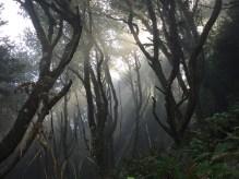 Im Wald bei Cape Meares